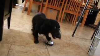 Clever Dog Rings Bell to Receive His Treats - Video