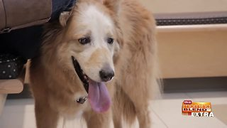 Blend Extra: Treating Pet Cancer with Advanced Technology
