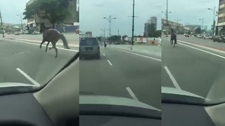 Runaway Horse Gallops Along Busy Malaysian Highway - Video