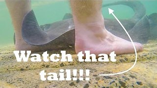 Stingray Gets Up Close and Personal With This Man's Feet - Video