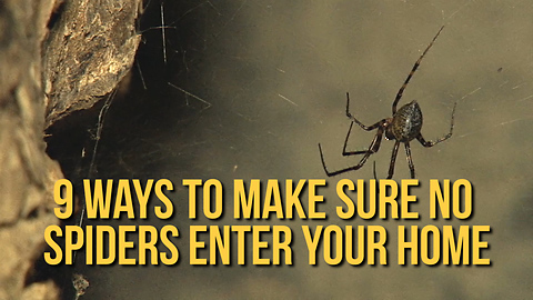 How to Make Sure No Spiders Enter Your Home