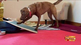Keeping Your Dog Busy and Active During Isolation