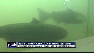 No Chinook fishing on South Fork Salmon, Upper Salmon rivers