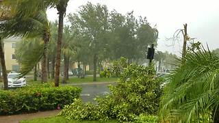 Hurricane Irma snaps tree in half in Jupiter, Florida - Video