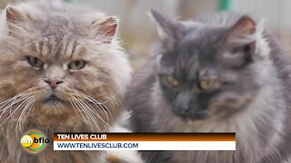 Clyde's Feed and Animal Center - Ten LIves Club