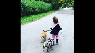 Little girl preciously walks pair of dogs