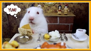Hamster Eats Teeny Tiny Thanksgiving Dinner - Video