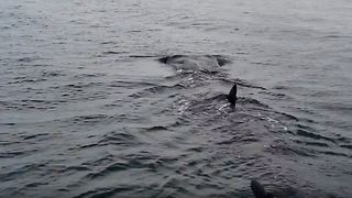 Family on Boat Spot Whale Shark Close to Shore at Gulf Coast - Video