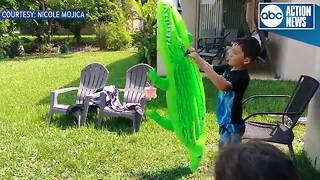 Orlando family plays in backyard with alligator watching just feet away
