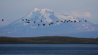 Why Is A Proposed Road In An Alaskan Wildlife Refuge So Controversial? - Video