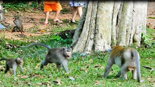 Daughter Call Mother To Fighting Big Male Monkey - Video
