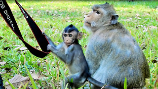 Mom Monkey Take Food Her Daughter Eat  - Video