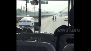 Horses run loose on busy motorway in China - Video