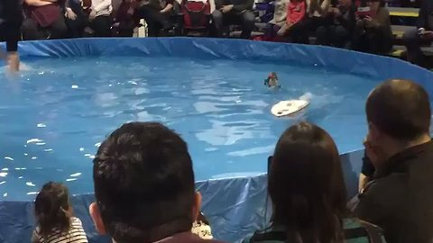 Waterskiing Squirrel Wows the Crowd at Toronto Boat Show