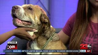 Meet our 23ABC Pet of the Week, Belle! - Video