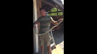 Snake catcher removes 8.8ft black mamba from private bar - Video