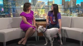 Pet of the Week:  Rihanna - Video