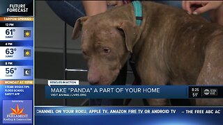 Rescues in Action Feb. 2 | Panda needs a home