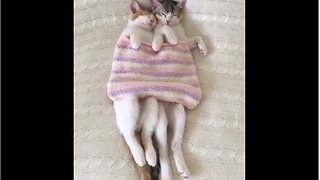 Loving kittens preciously snuggle together
