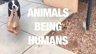 Funny Video Compilation Of Animals Trying To Be Humans