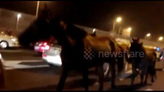Runaway horses gallop along Chinese highway - Video