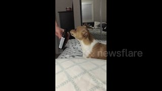 Dog has hilarious reaction to smelling cough syrup