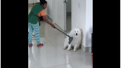 Here's The New Fun Way To Clean Your Dog!
