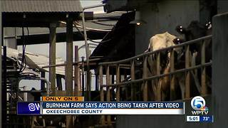 Burnham Farm says action being taken after video - Video