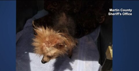 Martin County dog owner charged with animal cruelty