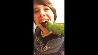 Pet bird pulls out boy's tooth - Video
