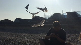 Kids trick unaware Dad with seagulls by throwing chips behind him  - Video