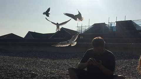 Kids trick unaware Dad with seagulls by throwing chips behind him