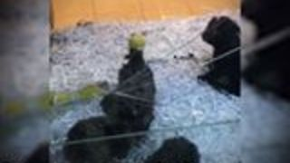Concerns Raised After Puppies Discovered Behind Cracked Glass at Pet Store - Video