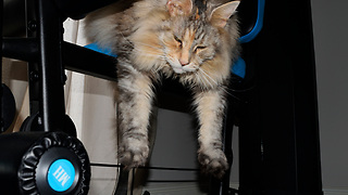 Lazy Cat Relaxes On The Exercise Machine