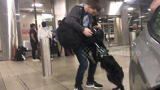 US Airman Reunites With Canine Companion After Two Years Apart - Video