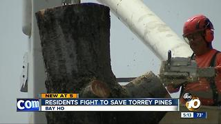 Residents fight to save Torrey Pines - Video