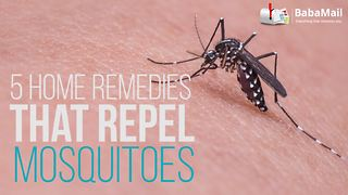 5 home remedies that repel mosquitoes