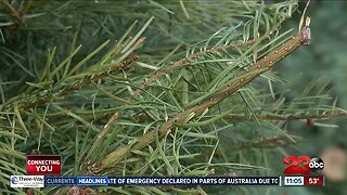 Kern County Public Works is offering options for recycling your Christmas tree