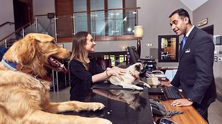 Dog-friendly hotel gets tails wagging with room service and luxury beds - Video