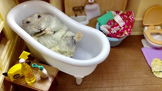 Lazy hamster enjoys snack in the bathtub