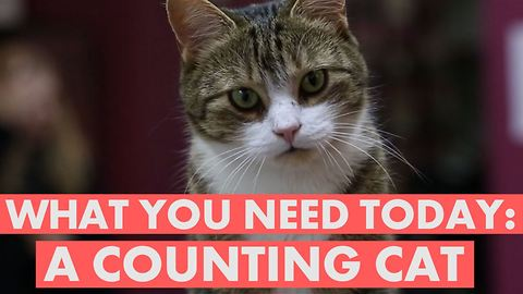 This cat may be better at math than you