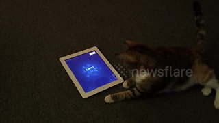 Cat tries to catch fish on tablet - Video