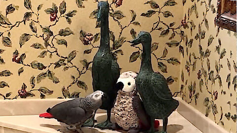 Romantic parrot wants a secret tryst with look-alike toy parrot