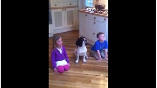 Dog Loves Performing Tricks With Her Human Siblings - Video