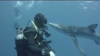 Diver kisses shark in the Azores