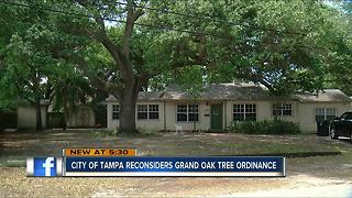 City of Tampa reconsiders Grand Oak Tree ordinance - Video