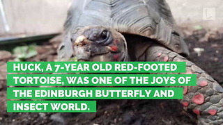 Three Weeks after Rare Tortoise Stolen from Zoo, Shell Found in Abandoned Street… - Video