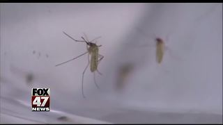 West Nile Virus confirmed in Macomb Co., residents urged to take caution - Video