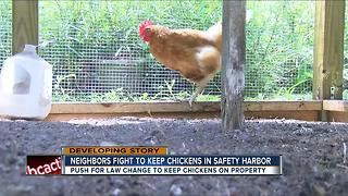 Safety Harbor officials to consider new chicken law - Video