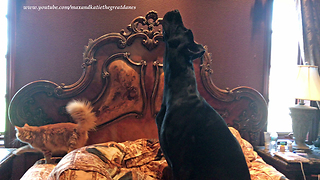 Canine And Feline Do Their Morning Stretching Routine Together
